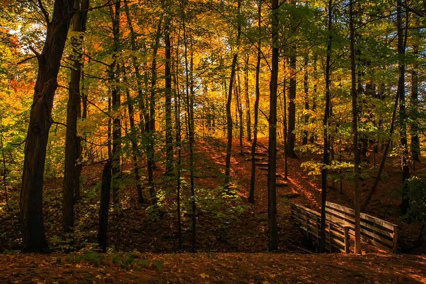تصاویری از طبیعت کانادا