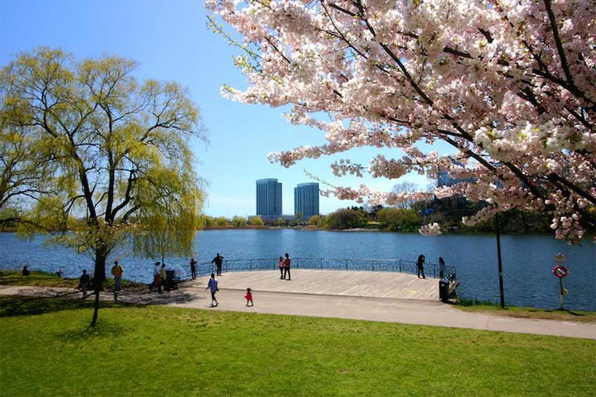 های پارک تورنتو