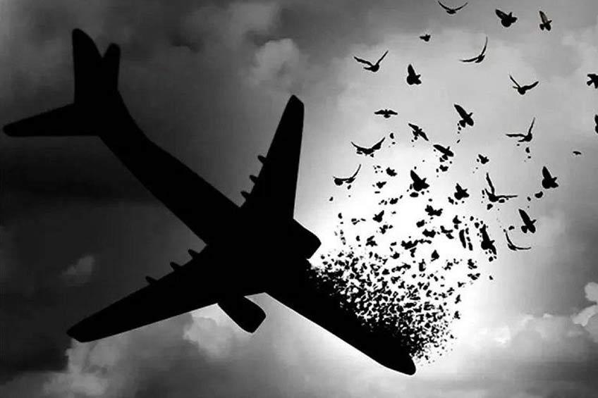 اقامت دائم برای خانواده قربانیان سقوط هواپیما